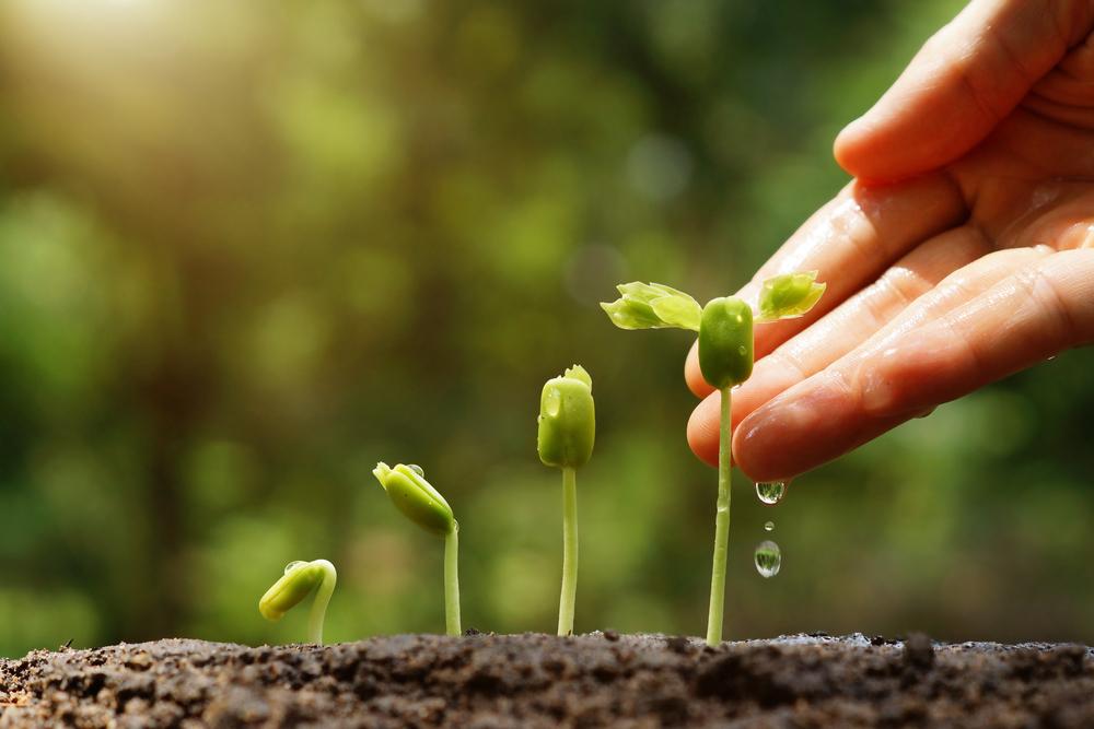 plants-nurturing